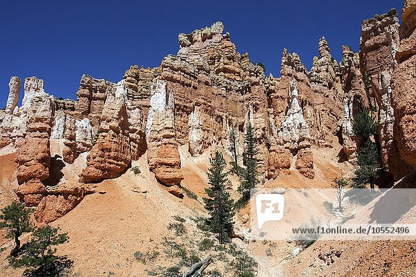 Farbige Gesteinsformationen  Hoodoos  am Queens Garden Trail  Bryce-Canyon-Nationalpark  Utah  USA  Nordamerika
