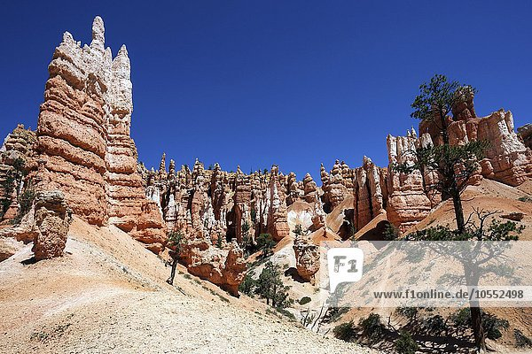 Farbige Gesteinsformationen  Hoodoos  am Queens Garden Trail  Bryce-Canyon-Nationalpark  Utah  USA  Nordamerika