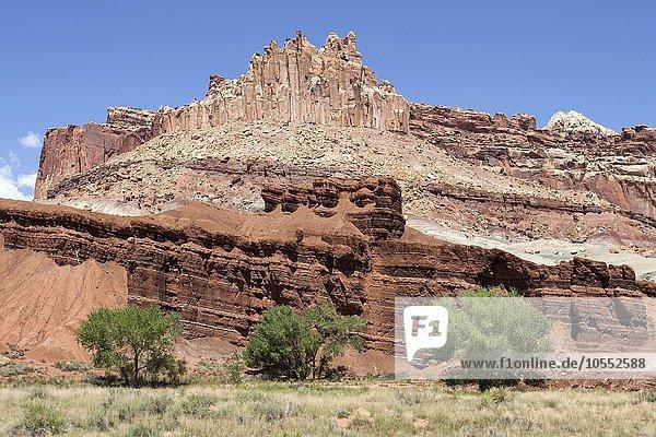 Landschaft und Gesteinsformationen bei Fruita  hinten The Castle  Capitol Reef Nationalpark  Utah  USA  Nordamerika