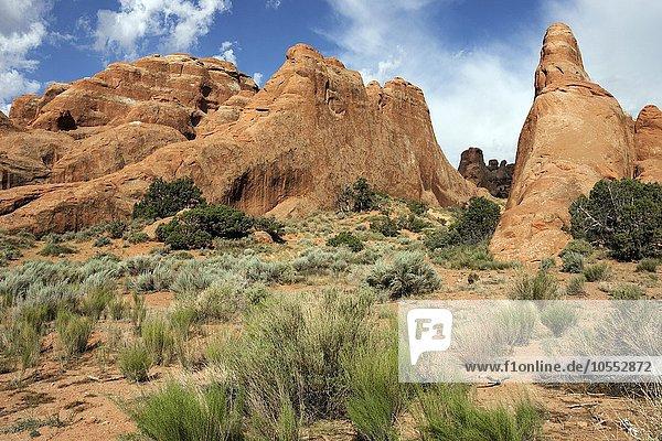 Felsformationen am Devils Garden Trailhead  Arches National Park  Utah  USA  Nordamerika