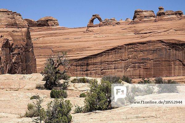 Ausblick vom upper Delicate Arch Viewpoint auf den Delicate Arch  Arches National Park  Utah  USA  Nordamerika