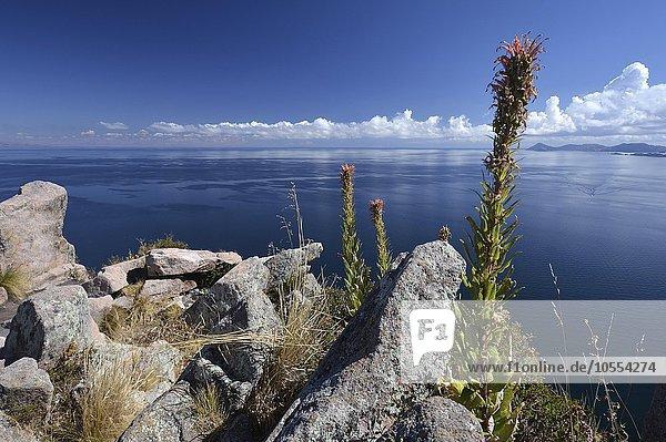 Lake Titicaca  Copacabana  Bolivia  South America