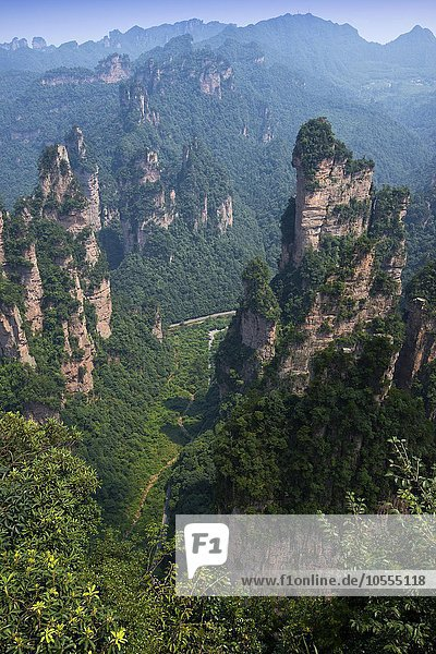 Sandsteintürme  in den Bergen von Zhangjiajie  Wulingyuan National Park  Hunan Provinz  China  Asien