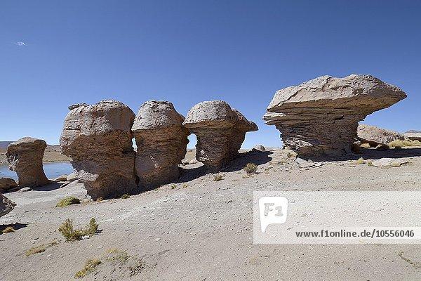 Mushroom rocks  rock formations created by wind erosion  Valle de Las Rocas  Uyuni  Bolivia  South America