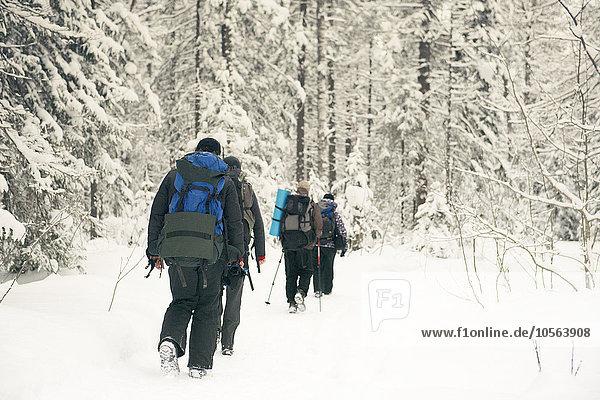 Europäer gehen Schnee Wald wandern
