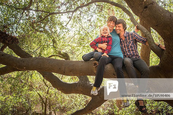 Junge  Mutter und Vater  im Baum sitzend