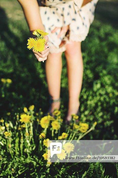 Taille unten der jungen Frau  die sich über das Pflücken von Löwenzahnblüten beugt  Differentialfokussierung