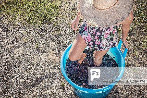 Frau stampfend Trauben im Eimer  Quartucciu  Sardinien  Italien