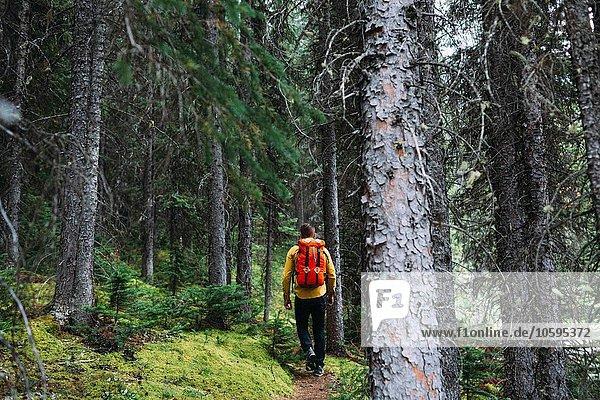Rückansicht eines erwachsenen Mannes mit orangefarbenem Packsack durch den Wald  Moraine Lake  Banff National Park  Alberta Canada