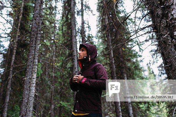 Flachwinkelansicht eines erwachsenen Mannes im Wald mit wasserdichtem Mantel  Blick weg  Moränensee  Banff Nationalpark  Alberta Kanada