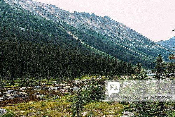 Felslandschaft und Wald unter den Bergen  Moraine Lake  Banff National Park  Alberta Canada