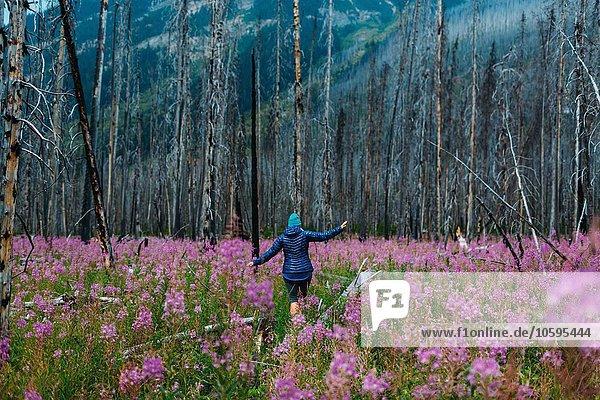Rückansicht der mittleren erwachsenen Frau beim Balancieren auf umgestürztem Baum im Feld der Wildblumen  Moränensee  Banff Nationalpark  Alberta Canada
