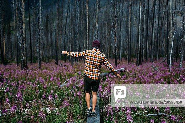 Rückansicht eines erwachsenen Mannes  der auf einem umgestürzten Baum im Feld der Wildblumen balanciert  Moränensee  Banff Nationalpark  Alberta Canada