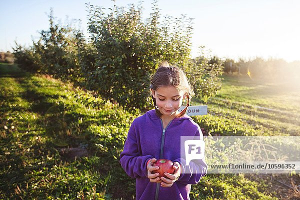 Girl in orchard holding apple looking down smiling