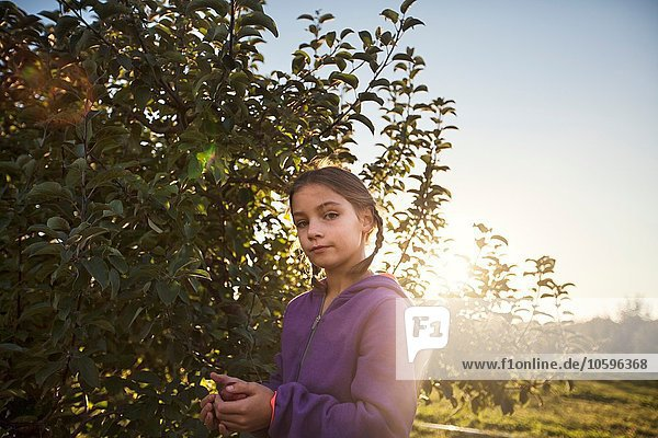 Girl in orchard picking apple from tree  looking at camera