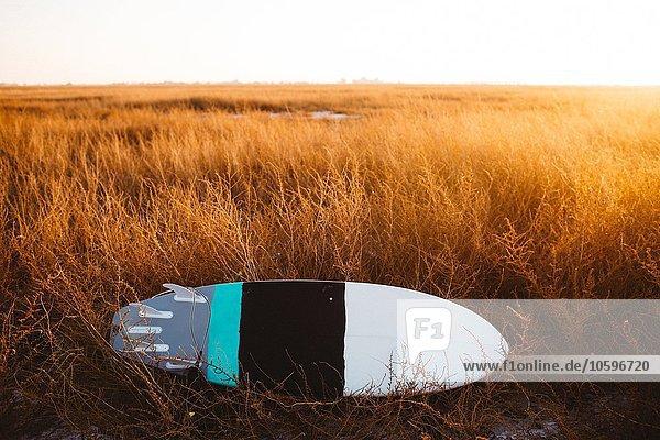 Surfbrett liegend im Feld von langem Gras bei Sonnenuntergang  San Luis Obispo  Kalifornien  USA