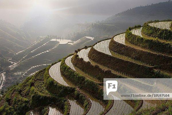 Hochwinkelansicht der Reisfelder auf den terrassierten Reisfeldern von Longsheng  Guangxi Zhuang  China