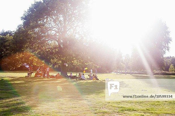 Erwachsene Freunde sitzen unter einem Baum bei Sonnenuntergang Party im Park