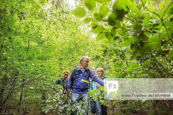 Gruppe von Freunden  Wanderung durch den Wald
