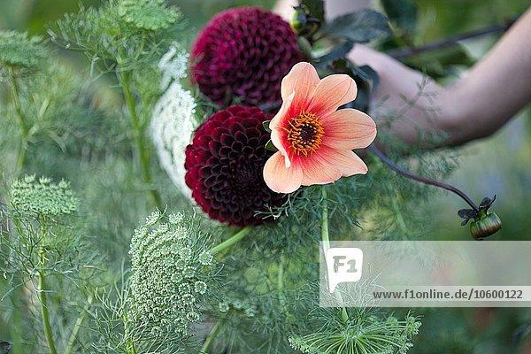 Womans Hand  die frische Blumen und Farne an der Zuteilung hält