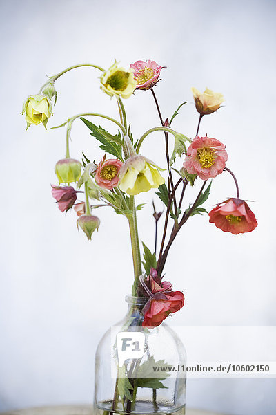 Wasser Close-up Blumenvase