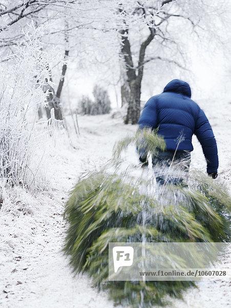 Mann Weihnachtsbaum Tannenbaum ziehen