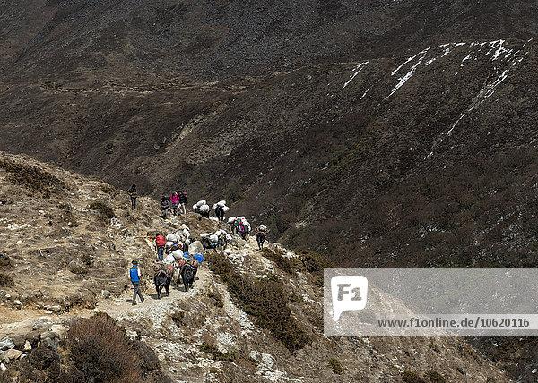 Nepal  Himalaya  Khumbu  trekkers and pack animals on hiking trail