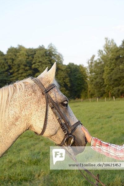 Hand streichelnder Pferdekopf