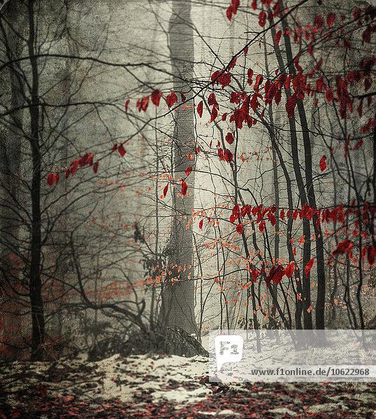 Winterwald mit letzten Blättern