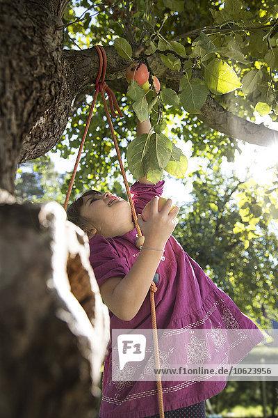 Mädchen greift nach einem Apfel am Baum