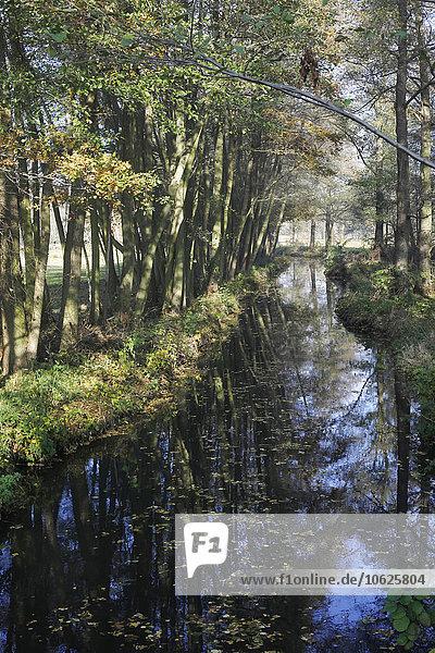 Germany  Brandenburg  Spreewald in autumn