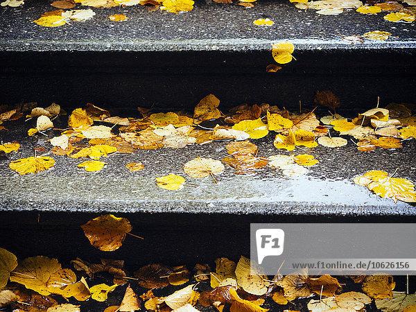 Herbstblätter auf Steintreppe