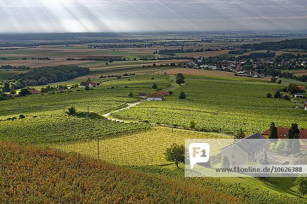 Österreich  Burgenland  Eisenberg an der Pinka  Weinberge