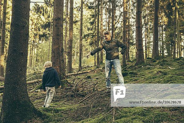 Erwachsener Mann sammelt Pilze mit kleinem Jungen