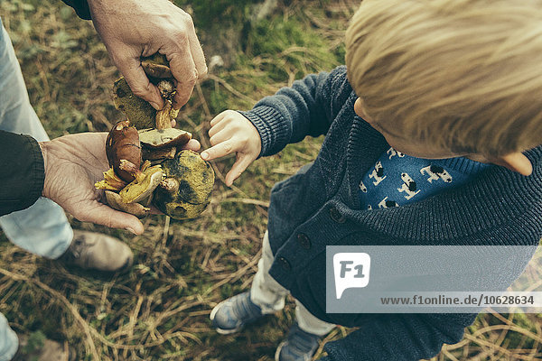 Kleiner Junge schaut auf braune Steinpilze in der Hand des Mannes.