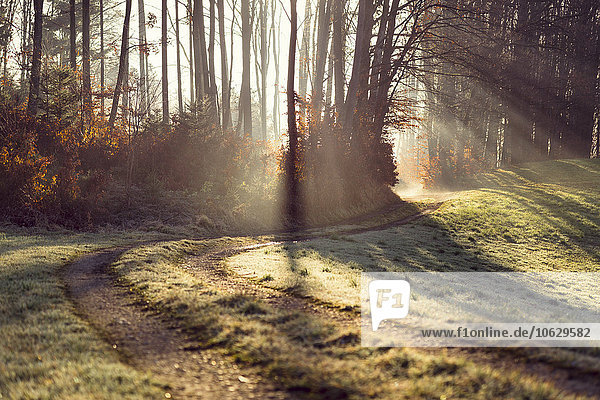 Österreich  Waldweg und Sonnenlicht am Morgen
