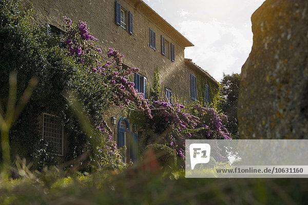 Italien  Toskana  Maremma  Blühender Garten eines Landhauses