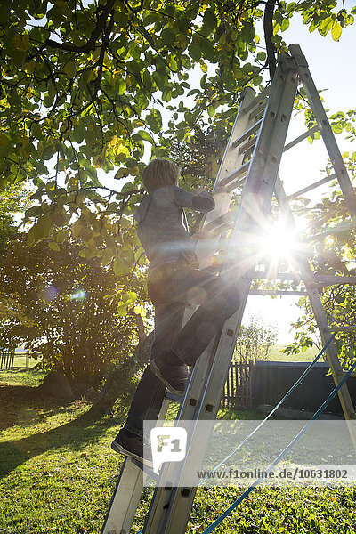 Rückansicht des Jungen auf einer Leiter im Garten