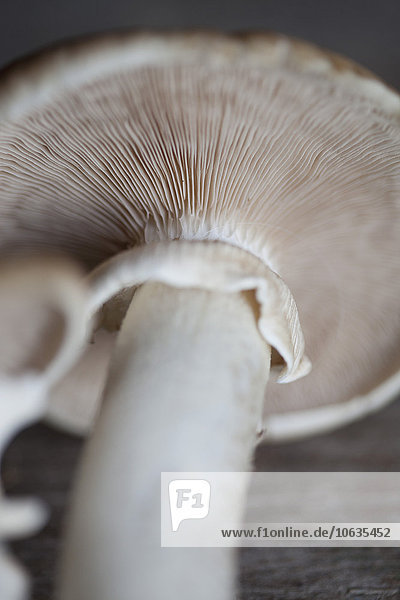 Close-up of mushroom on table