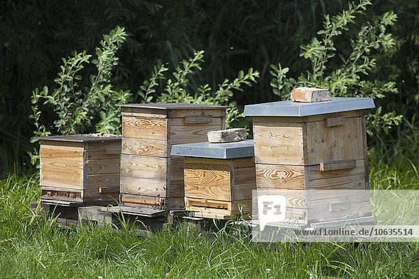 Reihe von Bienenstöcken auf dem Feld