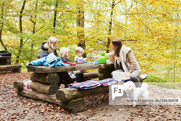 People sitting on wooden table in forest