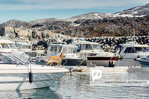 stehend Berg Hund vertäut Fluss Yacht