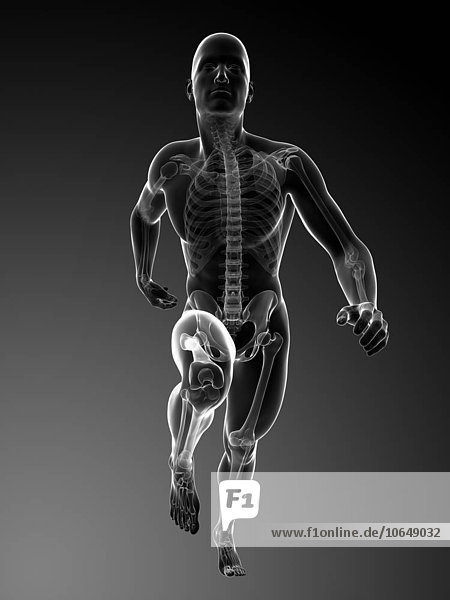 Human anatomy running  artwork