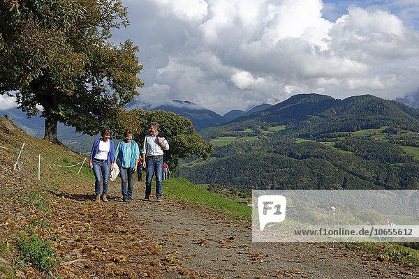 Wanderer am Keschtnweg bei Feldthurns  Eisacktal  Südtirol  Alto Adige  Italien  Europa