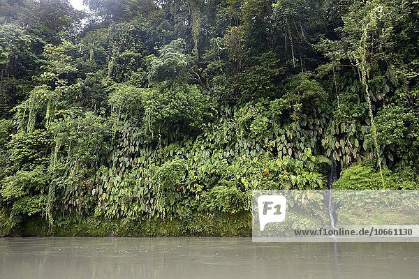 Rainforest on riverbank of Rio Andagueda  Chocó Department  Colombia  South America