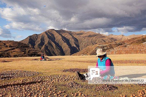 Frau Ruine Kartoffel aufheben Ethnisches Erscheinungsbild Cuzco Cusco Peru Südamerika