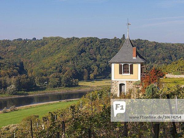 Schwalbennest im Weinberg Rote Presse mit Elbe  bei Coswig  Sachsen  Deutschland  Europa