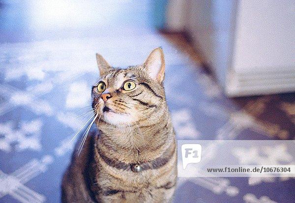 Interior zu Hause Katze
