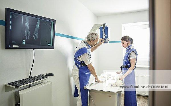 Tierärzte untersuchen einen Hund in einer Tierarztpraxis  Tierärzte beim Röntgen  Österreich  Europa