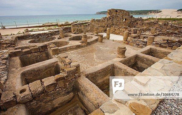Fisch Pisces Europa Ausgrabungsstätte Ruine Soße Fabrikgebäude Speisesalz Salz Playa de Bolonia Andalusien Spanien